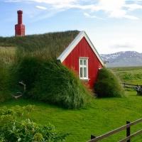 Breidafjördur, sealing grass