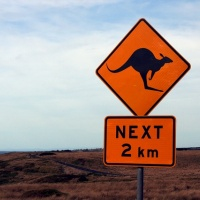 Shield, street sign, warning, kangaroos